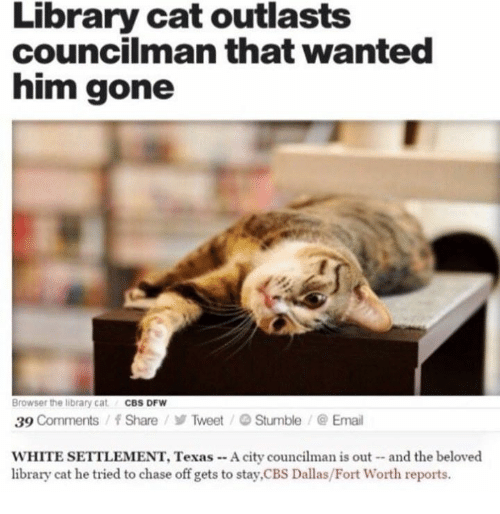 Cat, Dfw, and Gone: Library cat outlasts  councilman that wanted  him gone  Browser the library cat  CBS DFW  39  Comments f Share Tweet Stumble Email  WHITE SETTLEMENT, Texas A city  councilman is out and the beloved  library cat he tried to chase off gets to stay,CBS Dallas/Fort Worth reports.