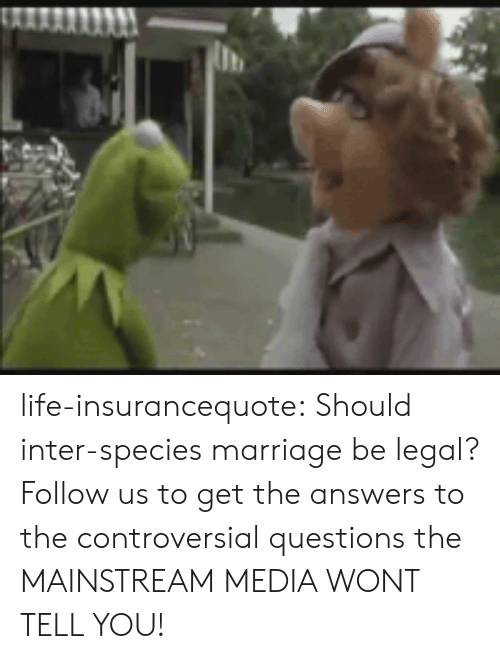 Life, Marriage, and Tumblr: life-insurancequote: Should inter-species marriage be legal?    Follow us to get the answers to the controversial questions the MAINSTREAM MEDIA WONT TELL YOU!