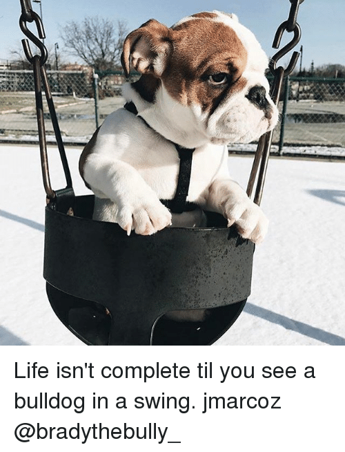 Life, Memes, and Bulldog: Life isn't complete til you see a bulldog in a swing. jmarcoz @bradythebully_