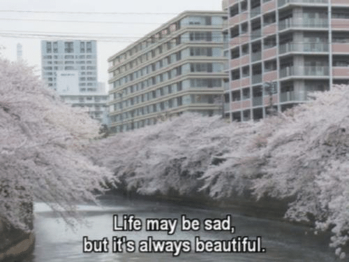 Beautiful, Life, and Sad: Life may be sad  but it's always beautiful