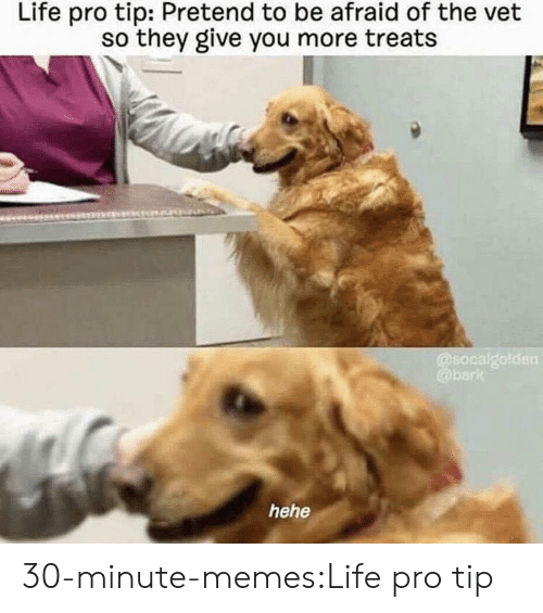 Life, Memes, and Target: Life pro tip: Pretend to be afraid of the vet  so they give you more treats  hehe 30-minute-memes:Life pro tip