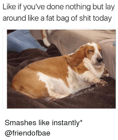 Funny, Meme, and Shit: Like if you've done nothing but lay  around like a fat bag of shit today Smashes like instantly* @friendofbae