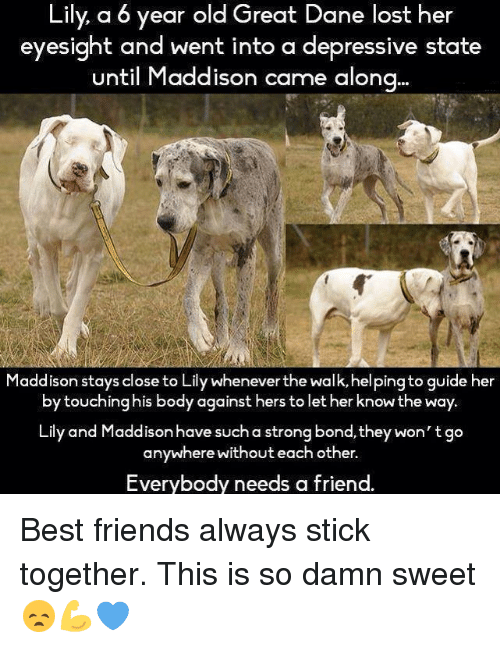 Best Friend, Memes, and Depression: Lily a 6 year old Great Dane lost her  eyesight and went into a depressive state  until Maddison came along  addison stays close to Lily Whenever the Wa  guide her  by touching his body against hers to let her know the way.  Lily and Maddison have such a strong bond, they won't go  anywhere without each other.  Everybody needs a friend. Best friends always stick together. This is so damn sweet 😞💪💙
