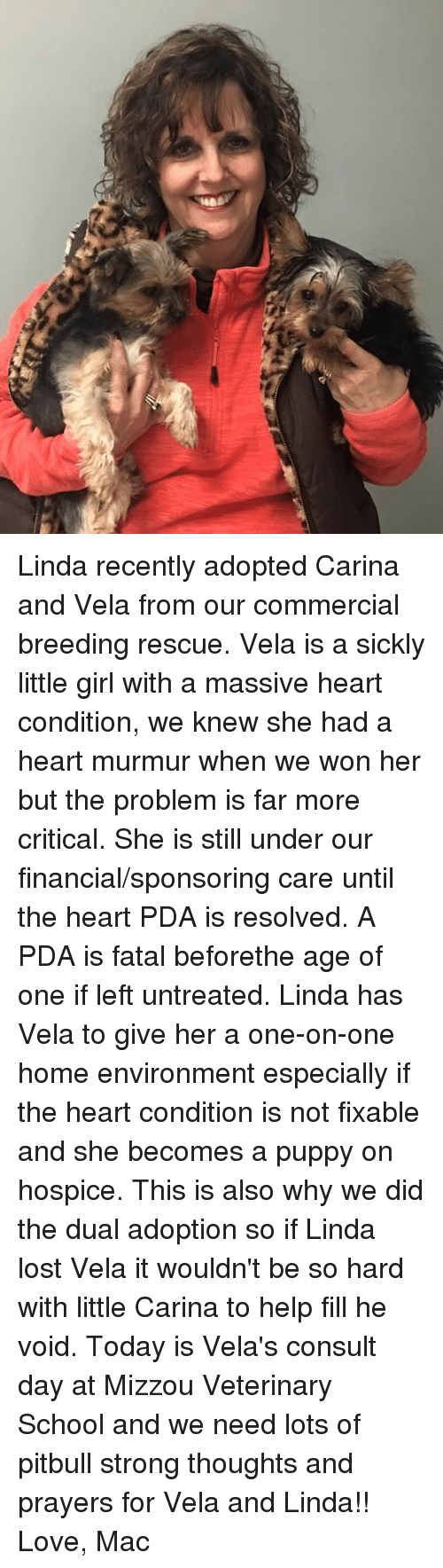 Love, Memes, and School: Linda recently adopted Carina and Vela from our commercial breeding rescue. Vela is a sickly little girl with a massive heart condition, we knew she had a heart murmur when we won her but the problem is far more critical. She is still under our financial/sponsoring care until the heart PDA is resolved. A PDA is fatal beforethe age of one if left untreated. Linda has Vela to give her a one-on-one home environment especially if the heart condition is not fixable and she becomes a puppy on hospice. This is also why we did the dual adoption so if Linda lost Vela it wouldn't be so hard with little Carina to help fill he void. Today is Vela's consult day at Mizzou Veterinary School and we need lots of pitbull strong thoughts and prayers for Vela and Linda!!   Love, Mac