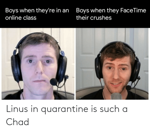 chad: Linus in quarantine is such a Chad