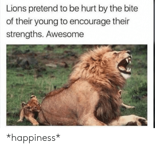 Lions, Awesome, and Happiness: Lions pretend to be hurt by the bite  of their young to encourage their  strengths. Awesome *happiness*