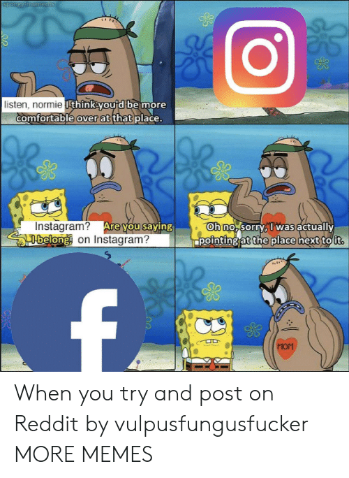 Comfortable, Dank, and Instagram: listen, normie I  think you'd be more  comfortable over at that place.  Instagram?  belong on Instagram?  gh no sorrv, I Was actuallx  pointingjaythe place nextou  Mom When you try and post on Reddit by vulpusfungusfucker MORE MEMES