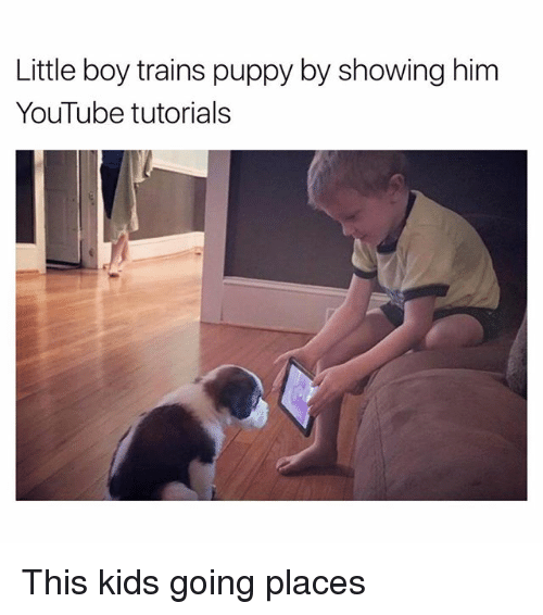 Funny, youtube.com, and Kids: Little boy trains puppy by showing him  YouTube tutorials This kids going places