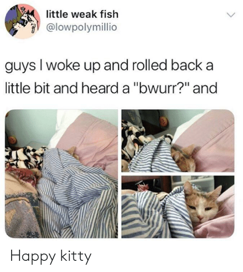 """Fish, Happy, and Back: little weak fish  @lowpolymillio  guys I woke up and rolled back a  little bit and heard a """"bwurr?"""" and Happy kitty"""