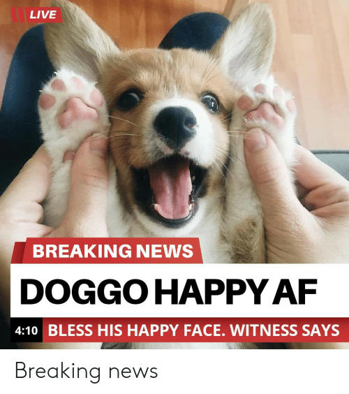 Af, News, and Breaking News: LIVE  BREAKING NEWS  DOGGO HAPPY AF  4:10 BLESS HIS HAPPY FACE. WITNESS SAYS Breaking news