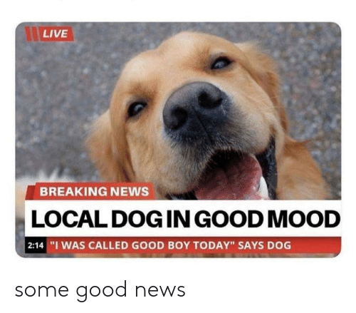 "Mood, News, and Breaking News: LIVE  BREAKING NEWS  LOCAL DOG IN GOOD MOOD  | 2:14 ""I WAS CALLED GOOD BOY TODAY"" SAYS DOG some good news"