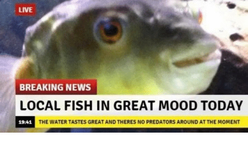 Mood, News, and Breaking News: LIVE  BREAKING NEWS  LOCAL FISH IN GREAT MOOD TODAY  19:41  THE WATER TASTES GREAT AND THERES NO PREDATORS AROUND AT THE MOMENT