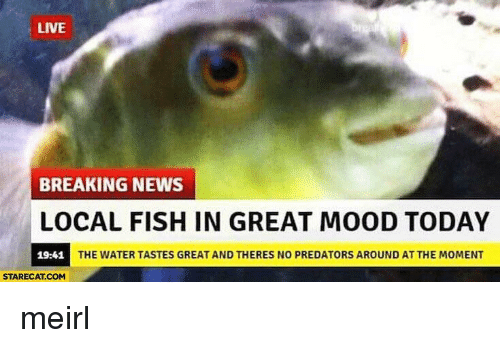 Mood, News, and Breaking News: LIVE  BREAKING NEWS  LOCAL FISH IN GREAT MOOD TODAY  19:41  THE WATER TASTES GREAT AND THERES NO PREDATORS AROUND AT THE MOMENT  STARECAT.COM meirl