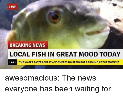 Mood, News, and Tumblr: LIVE  BREAKING NEWS  LOCAL FISH IN GREAT MOOD TODAY  19:41  THE WATER TASTES GREAT AND THERES NO PREDATORS AROUND AT THE MOMENT awesomacious:  The news everyone has been waiting for