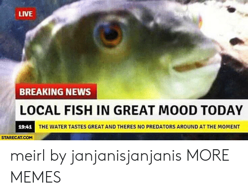 Dank, Memes, and Mood: LIVE  BREAKING NEWS  LOCAL FISH IN GREAT MOOD TODAY  19:41  THE WATER TASTES GREAT AND THERES NO PREDATORS AROUND AT THE MOMENT  STARECAT.COM meirl by janjanisjanjanis MORE MEMES