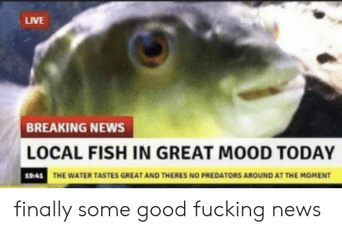 Fucking, Mood, and News: LIVE  BREAKING NEWS  LOCAL FISH IN GREAT MOOD TODAY  19:41 THE WATER TASTES GREAT AND THERES NO PREDATORS AROUND AT THE MOMENT finally some good fucking news