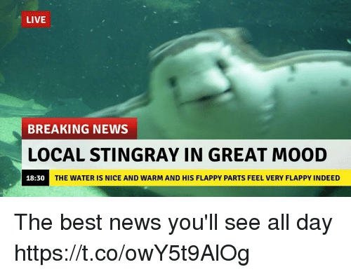 Greates: LIVE  BREAKING NEWS  LOCAL STINGRAY IN GREAT MOOD  18:30  THE WATER IS NICE AND WARM AND HIS FLAPPY PARTS FEEL VERY FLAPPY INDEED The best news you'll see all day https://t.co/owY5t9AlOg