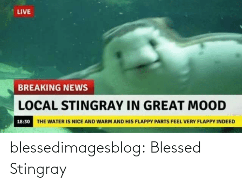 warm: LIVE  BREAKING NEWS  LOCAL STINGRAY IN GREAT MOOD  18:30 THE WATER IS NICE AND WARM AND HIS FLAPPY PARTS FEEL VERY FLAPPY INDEED blessedimagesblog:  Blessed Stingray