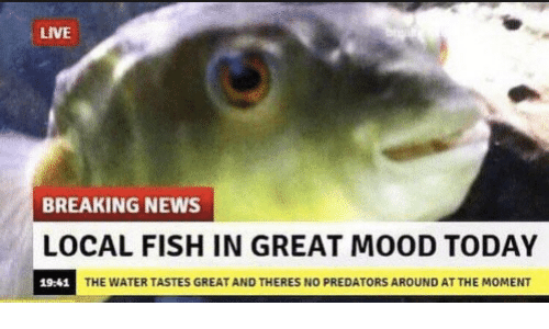 Mood, News, and Breaking News: LIVE  BREAKING NEWS  OCAL FISH IN GREAT MOOD TODAY  19-41  THE WATER TASTES GREAT AND THERES NO PREDATORS AROUND AT THE MOMENT