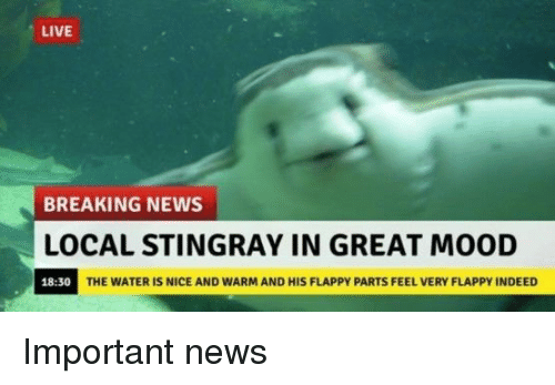 Mood, News, and Breaking News: LIVE  BREAKING NEWS  OCAL STINGRAY IN GREAT MOOD  18:30  THE WATER IS NICE AND WARM AND HIS FLAPPY PARTS FEEL VERY FLAPPY INDEED <p>Important news</p>