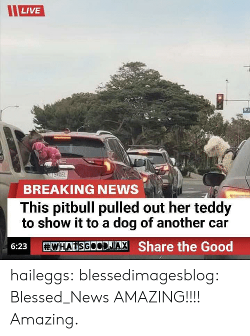 Blessed, News, and Target: LIVE  BREAKING NEWS  This pitbull pulled out her teddy  to show it to a dog of another car  WHATSGOODJA, Share the Good  6:23 haileggs:  blessedimagesblog:  Blessed_News  AMAZING!!!! Amazing.