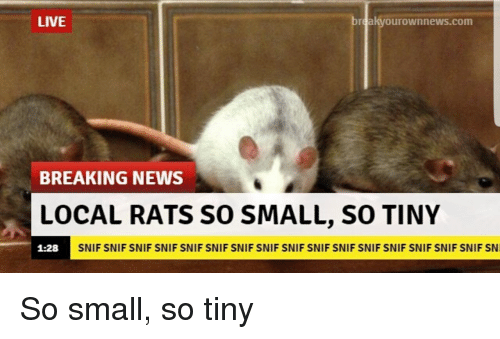 News, Breaking News, and Live: LIVE  breakyourownnews.com  BREAKING NEWS  LOCAL RATS SO SMALL, SO TINY  1:28  SNIF SNIF SNIF SNIF SNIF SNIF SNIF SNIF SNIF SNIF SNIF SNIF SNIF SNIF SNIF SNIF SN <p>So small, so tiny</p>
