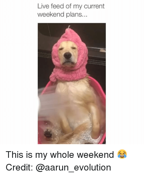 Memes, Evolution, and Live: Live feed of my current  weekend plans. This is my whole weekend 😂 Credit: @aarun_evolution
