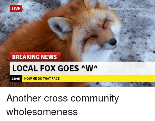 Community, News, and Breaking News: LIVE  nie  com  BREAKING NEWS  LOCAL FOX GOES Wn  23:45  HOW HE DO THAT FACE Another cross community wholesomeness