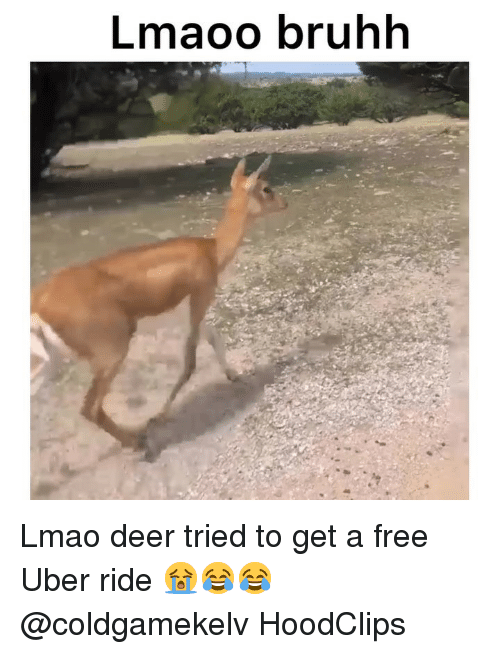 Deer, Funny, and Lmao: Lmaoo bruhh Lmao deer tried to get a free Uber ride 😭😂😂 @coldgamekelv HoodClips