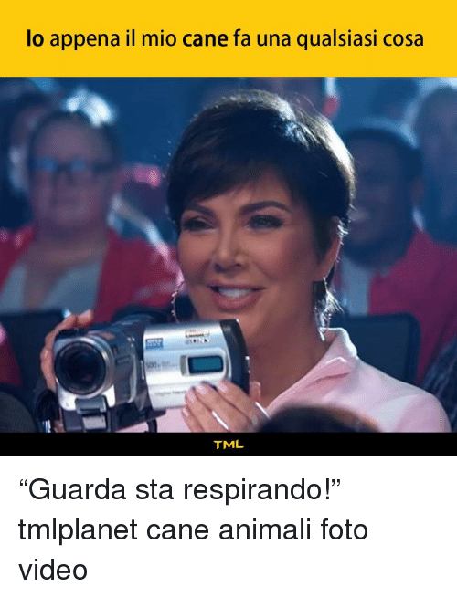 "Memes, Video, and 🤖: lo appena il mio cane fa una qualsiasi cosa  TML ""Guarda sta respirando!"" tmlplanet cane animali foto video"