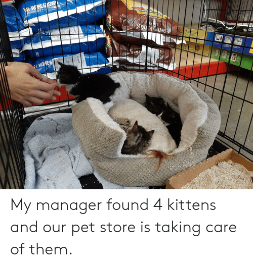Kittens, Net, and Grow: Lodtura L  anF Sh  NET WT  SO 50 L ST  16% PROEIN  THOME GROW  SCRAT N GRAINS  O ore igLoch P  Se&  Bl Lh  rate  tOpe Sey  id  te  P ofD  Ba La  azis  Grayy  RA  HOMEG  LAYER C  Cntyoedr  Folds My manager found 4 kittens and our pet store is taking care of them.