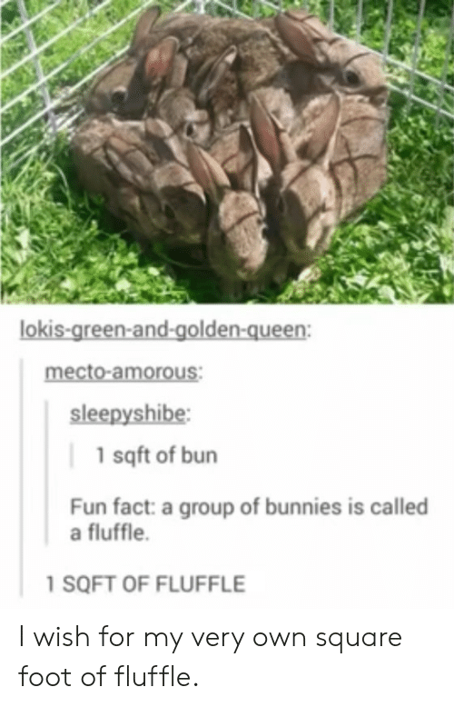 Bunnies, Queen, and Square: lokis-green-and-golden-queen:  mecto-amorous:  sleepyshibe  1 sqft of bun  Fun fact: a group of bunnies is called  a fluffle.  1 SQFT OF FLUFFLE I wish for my very own square foot of fluffle.