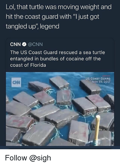 """cnn.com, Lol, and Cocaine: Lol, that turtle was moving weight and  hit the coast guard with """"I just got  tangled up', legend  CNN @CNN  The US Coast Guard rescued a sea turtle  entangled in bundles of cocaine off the  coast of Florida  US COAST GUARD  Nov 19, 2017  CAN Follow @sigh"""