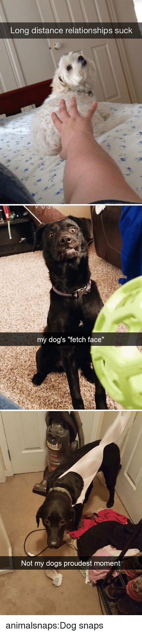 "Dogs, Relationships, and Target: Long distance relationships suck   my dog's ""fetch face""   Not my dogs proudest mom  ent animalsnaps:Dog snaps"