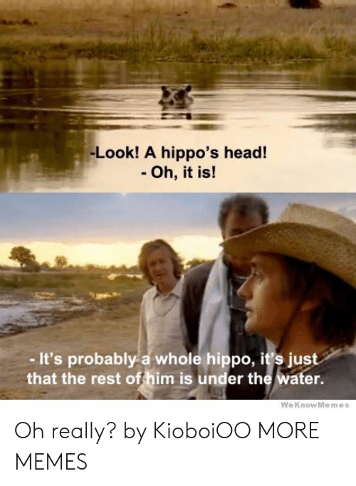 Weknowmemes: -Look! A hippo's head!  - Oh, it is!  - It's probably a whole hippo, it's just  that the rest offhim is under the water.  WeKnowMemes Oh really? by KioboiOO MORE MEMES