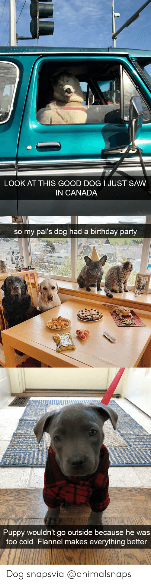 Birthday, Party, and Saw: LOOK AT THIS GOOD DOG I JUST SAW  IN CANADA   so my pal's dog had a birthday party   Puppy wouldn't go outside because he was  too cold. Flannel makes everything better Dog snapsvia @animalsnaps