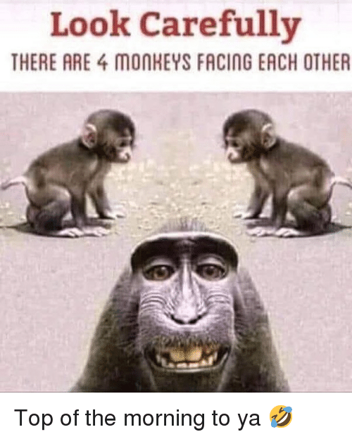 Memes, 🤖, and Top: Look Carefully  THERE ARE 4 MONKEYS FACING EACH OTHER Top of the morning to ya 🤣