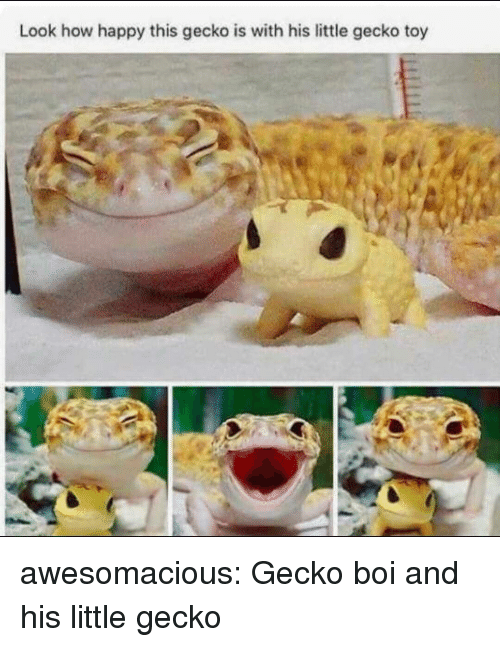 Tumblr, Blog, and Happy: Look how happy this gecko is with his little gecko toy awesomacious:  Gecko boi and his little gecko