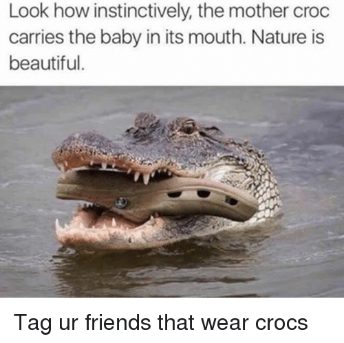 Beautiful, Crocs, and Friends: Look how instinctively, the mother croc  carries the baby in its mouth. Nature is  beautiful. Tag ur friends that wear crocs