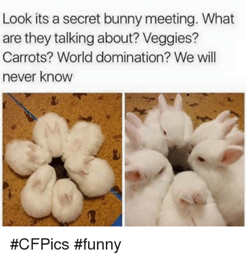 Bunni: Look its a secret bunny meeting. What  are they talking about? Veggies?  Carrots? World domination? We will  never know #CFPics #funny