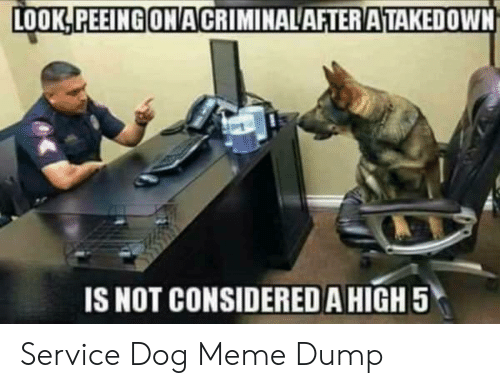Dog Meme: LOOK!PEEINGONACRIMINALAFTENATAKEDOWNİ  IS NOT CONSIDERED AHIGH 5 Service Dog Meme Dump