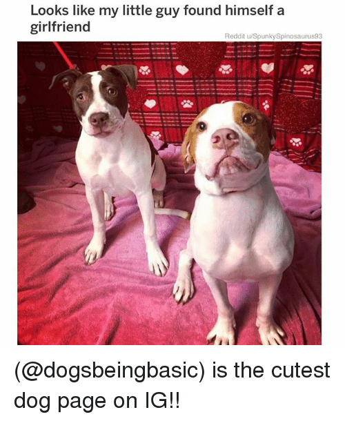 Memes, Reddit, and Girlfriend: Looks like my little guy found himself a  girlfriend  Reddit u/SpunkySpinosaurus93 (@dogsbeingbasic) is the cutest dog page on IG!!