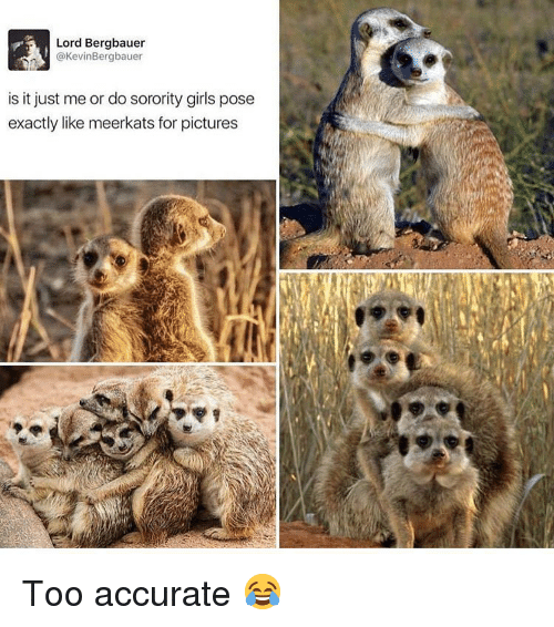 Girls, Memes, and Pictures: Lord Bergbauer  @KevinBergbauer  is it just me or do sorority girls pose  exactly like meerkats for pictures Too accurate 😂