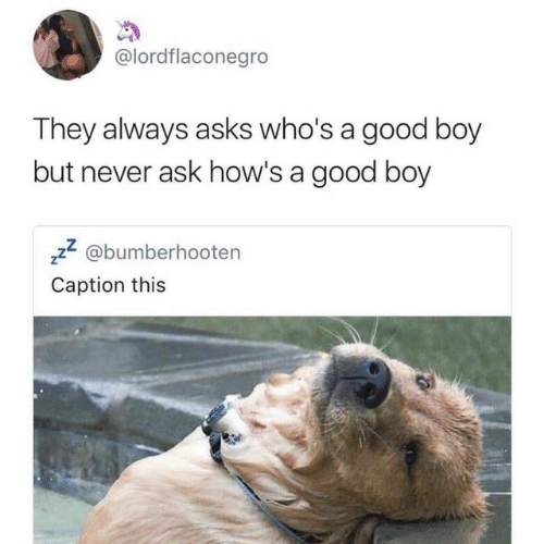 Good, Never, and Asks: @lordflaconegro  They always asks who's a good boy  but never ask how's a good boy  @bumberhooten  Caption this