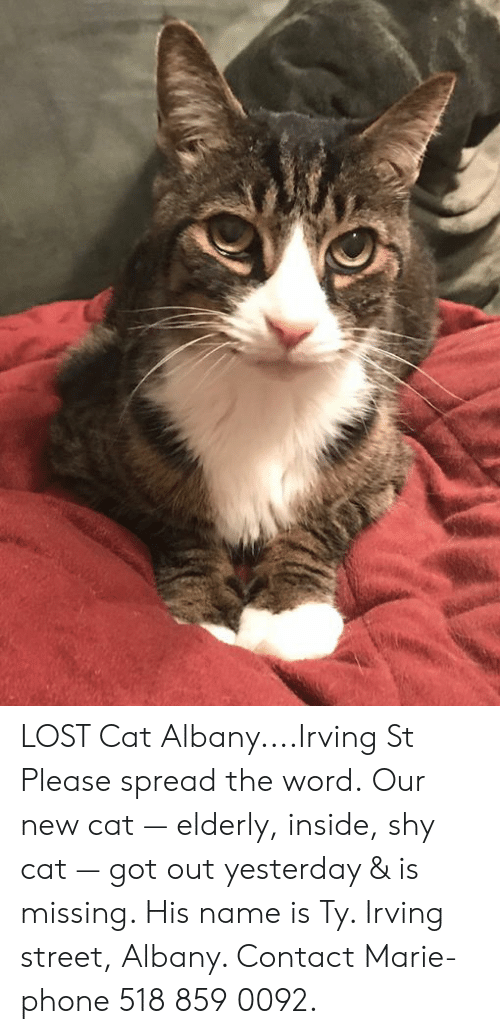 Memes, Phone, and Lost: LOST Cat Albany....Irving St  Please spread the word.   Our new cat — elderly, inside, shy cat — got out yesterday & is missing.  His name is Ty. Irving street, Albany.  Contact Marie- phone 518 859 0092.