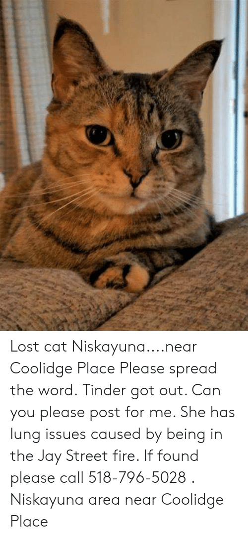 Fire, Jay, and Memes: Lost cat Niskayuna....near Coolidge Place  Please spread the word.  Tinder got out.  Can you please post for me.  She has lung issues caused by being in the Jay Street fire. If found please call 518-796-5028 .  Niskayuna area near Coolidge Place