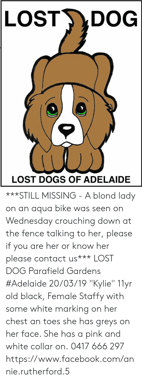 """DeMarcus Cousins, Dogs, and Facebook: LOST DOG  LOST DOGS OF ADELAIDE ***STILL MISSING - A blond lady on an aqua bike was seen on Wednesday crouching down at the fence talking to her, please if you are her or know her please contact us***  LOST DOG Parafield Gardens #Adelaide 20/03/19 """"Kylie"""" 11yr old black, Female Staffy with some white marking on her chest an toes she has greys on her face. She has a pink and white collar on. 0417 666 297  https://www.facebook.com/annie.rutherford.5"""