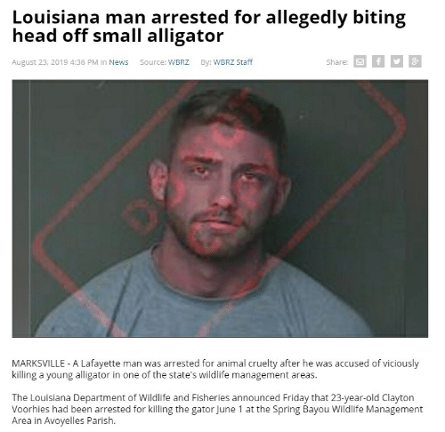 Friday, Head, and News: Louisiana man arrested for allegedly biting  head off small alligator  Share: f  August 23, 2019 4:36 PM in News  Source: WBRZ  By: WBRZ Staff  MARKSVILLE - A Lafayette man was arrested for animal cruelty after he was accused of viciously  killing a young alligator in one of the state's wildlife management areas.  The Louisiana Department of Wildlife and Fisheries announced Friday that 23-year-old Clayton  Voorhies had been arrested for killing the gator June 1 at the Spring Bayou Wildlife Management  Area in Avoyelles Parish.