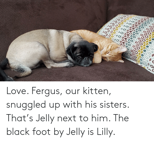 foot: Love. Fergus, our kitten, snuggled up with his sisters. That's Jelly next to him. The black foot by Jelly is Lilly.