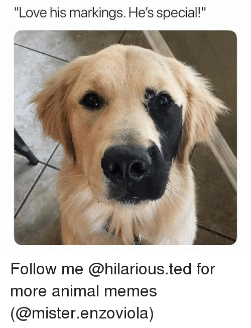 """Funny, Love, and Memes: """"Love his markings. He's special!"""" Follow me @hilarious.ted for more animal memes (@mister.enzoviola)"""